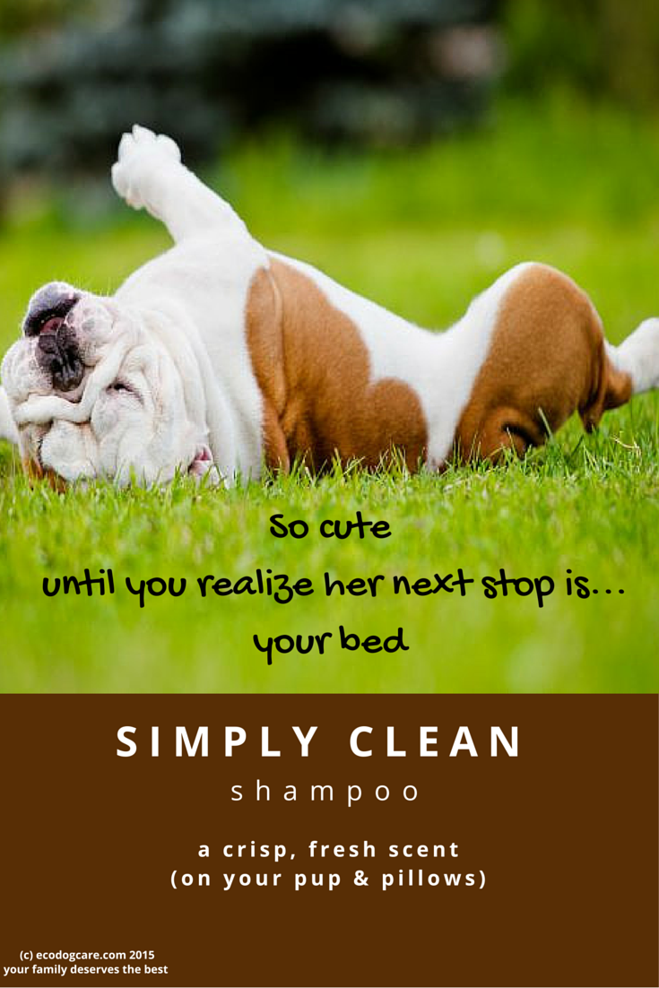 Pin by eco dog care on eco dog care because theyure family