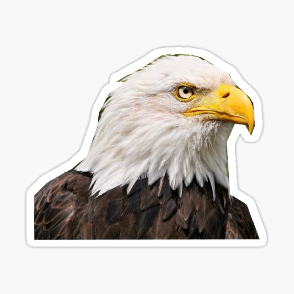 Bald Eagle Sticker By Masoncarr2244 Bald Eagle Bald Eagle Art Eagle Face
