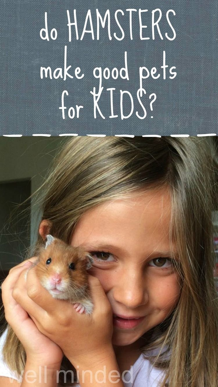 Is Your Child Begging For A Hamster Do Hamsters Make Good Pets