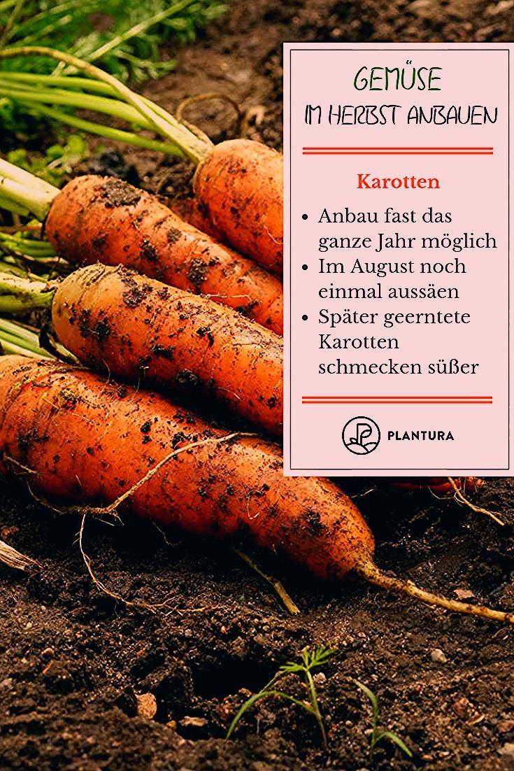 Gemüse im Herbst anbauen: Die 10 besten Pflanzen für die Nachkultur - Plantura