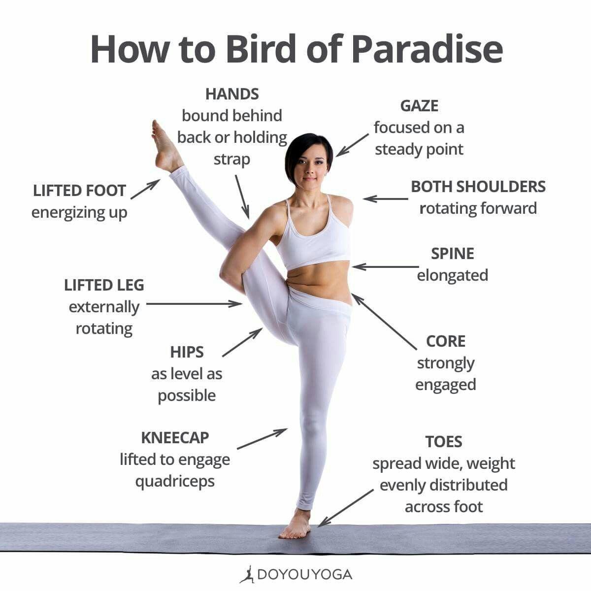 Bird Of Paradise Yoga Muscles