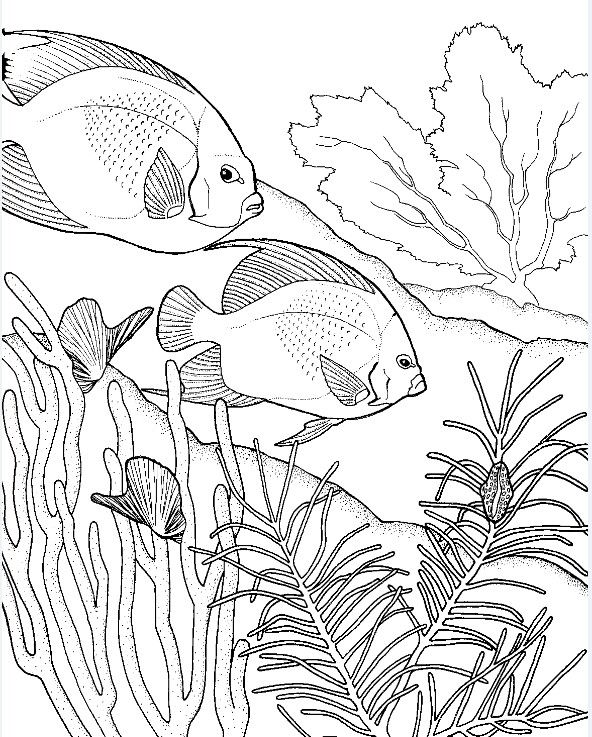 Adult coloring page Fishes Adult Coloring Pages / books