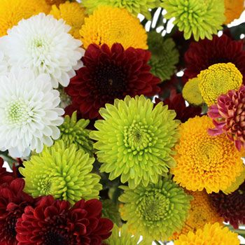 MASON JARS ON RECEPTION TABLES -  Ordered Fall Mini Button Pom in Assorted Colors Flower