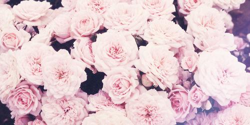 Flores Tumblr Buscar Con Google Imagenes Twitter Header Y