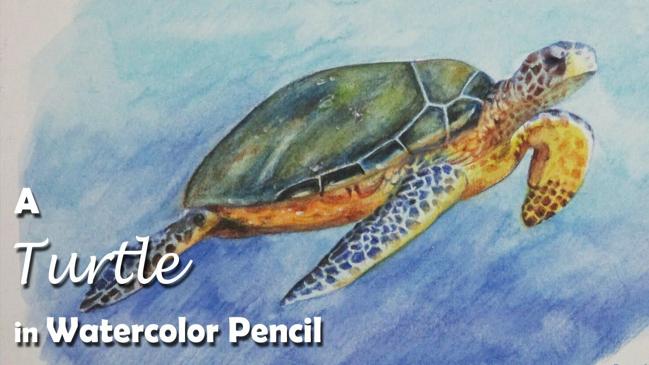 How To Paint A Turtle With Watercolor Pencil Youtube Turtle