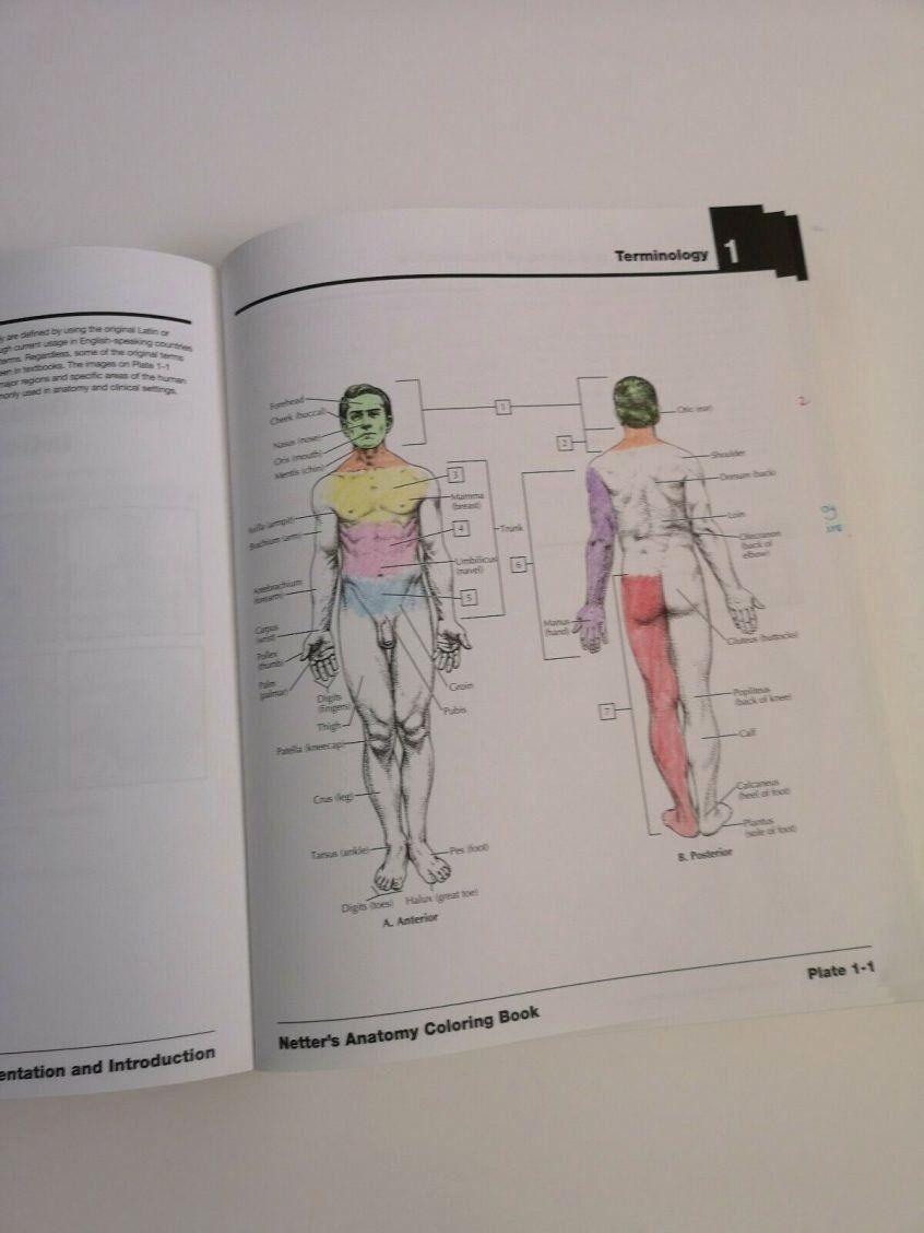 Gray 039 S Anatomy Coloring Book Unique Coloring Page For Kids Netters Anatomy Coloring Book With Anatomy Coloring Book Coloring Books Coloring Book Art