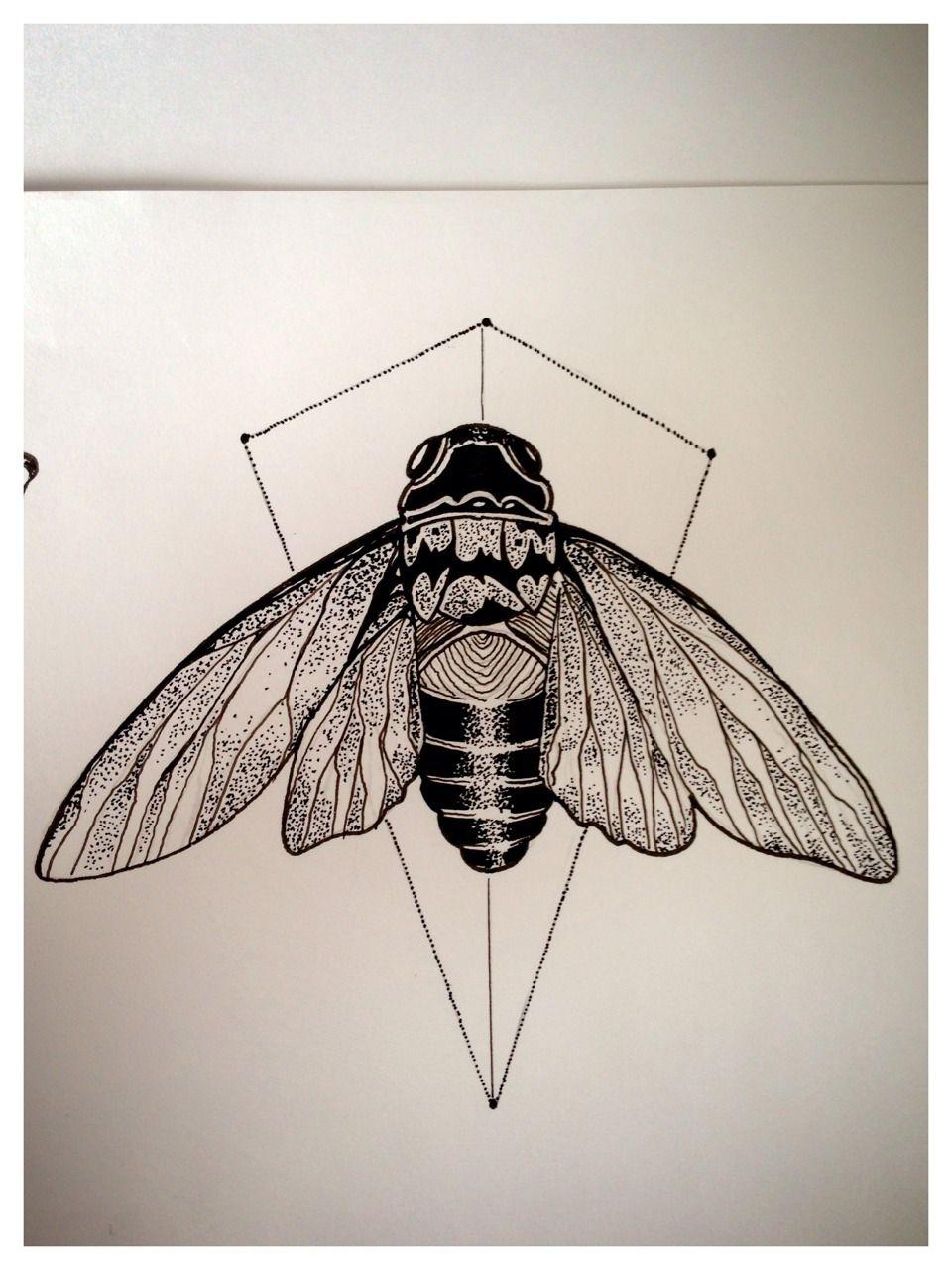 cicada drawing ...