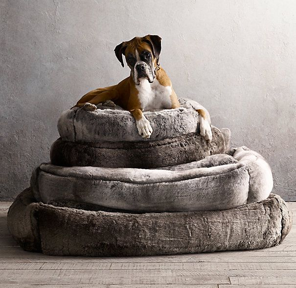 hardware the traditional bed best search with google dog animal carpeted restoration bedroom
