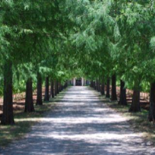 Fall Creek Vineyards In Tow Texas Near Marble Falls
