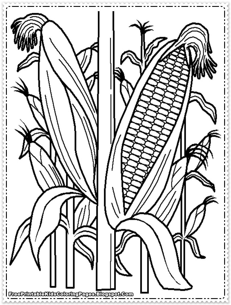 corn color page - corn coloring pages cornfield printable kids coloring