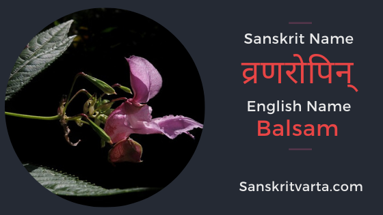 50 List Of Flowers Name In Sanskrit Language And Hindi With Pictures Sanskrit Learnsanskrit Sanskritvarta Flowe In 2020 Sanskrit Names Sanskrit Language Sanskrit