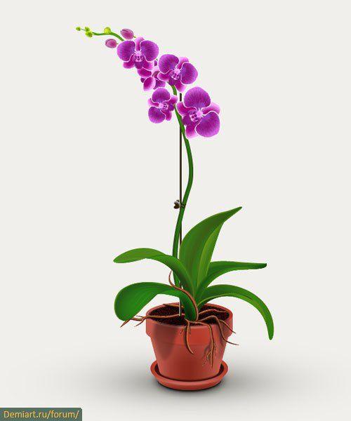 Цветы в горшках орхидея фото