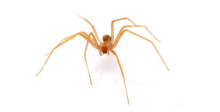 A brown recluse spider bit me now what with images