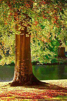 Tree, Summer, Autumn, Fall, Rust