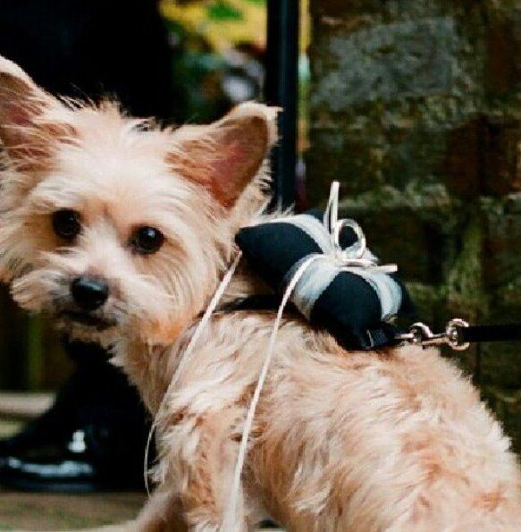 Dog carrying wedding rings Bodas Pinterest Wedding