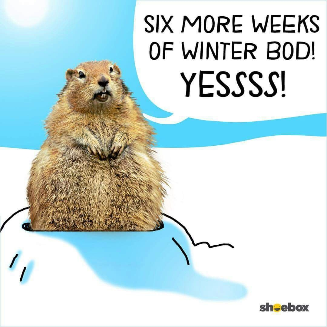 For now relax, no need to wax. #HappyGroundHogDay
