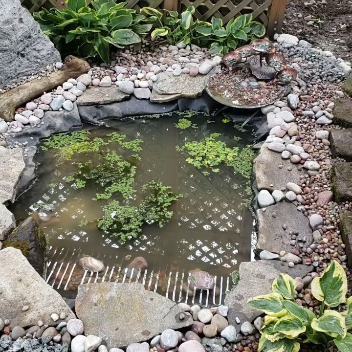 Our fathers day frog pond is finished!  #fathersday #frogpond #frogs #tadpoles  #pnw #pnwonderland #pnwphotographer #pnwlife #pnwphotography #herplife #ecosystem #waterhabitat #water #habitat #zen #wemadethis #homemade  #love #lovemyhubby