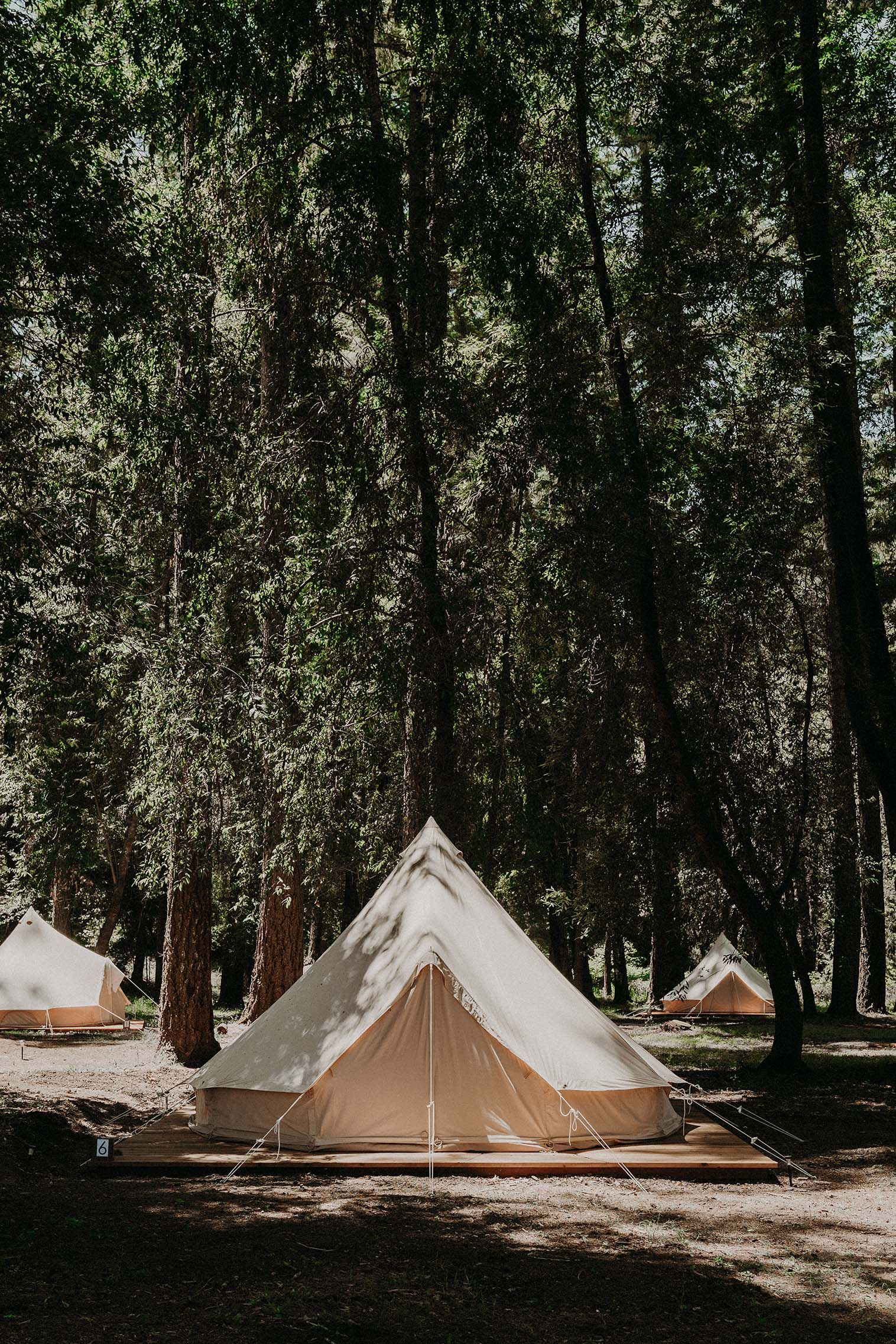 An Earthy, Natural Wedding in the California Redwoods ...