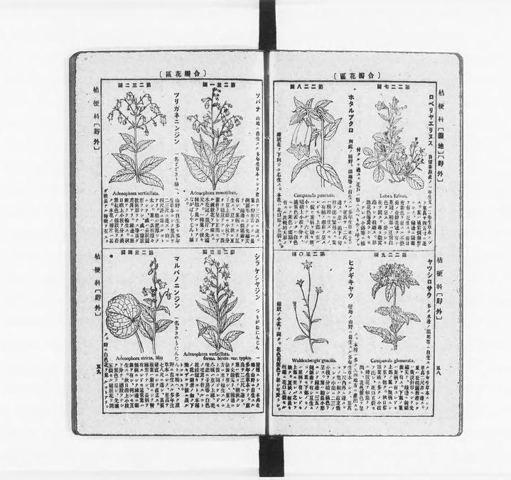 集成新植物図鑑 村越三千男 編 昭和24 15版 | 植物 図鑑, 図鑑, 村越