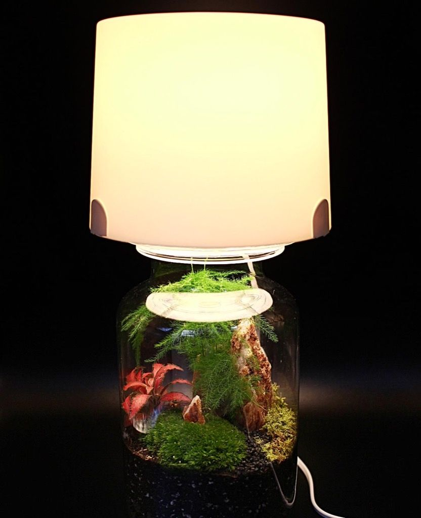 Terrarium Lamp An Easy Hack For Your Miniature Garden Light