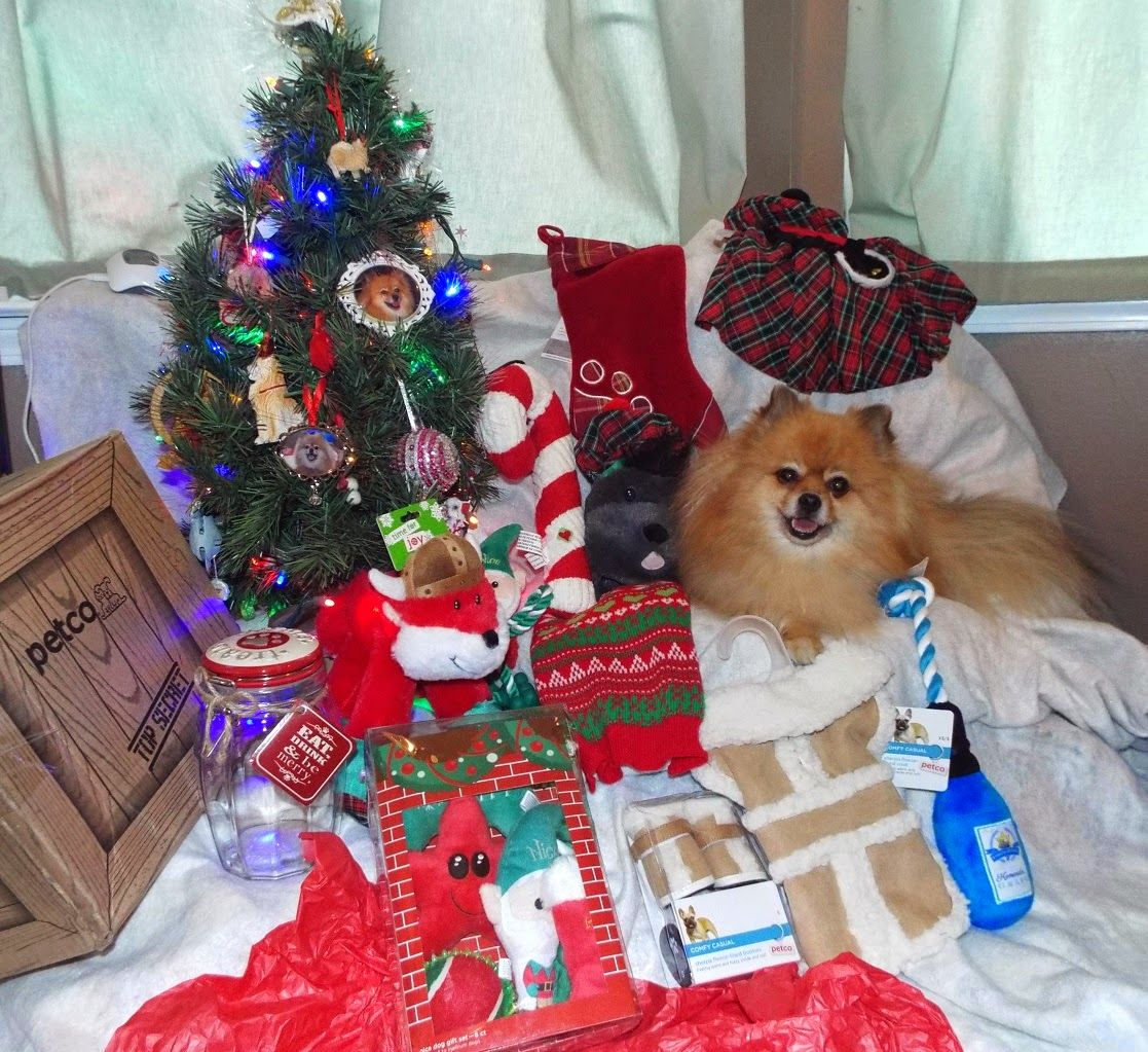 Petco Holiday Pet Product Review Pet holiday, Holiday