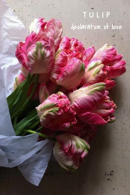 "tulip means ""declaration of love"" 