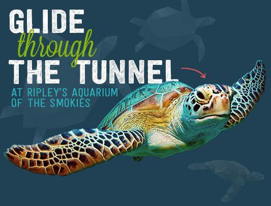 Shark Lagoon - Ripley's Aquarium of the Smokies
