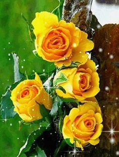 rosas amarillas gif