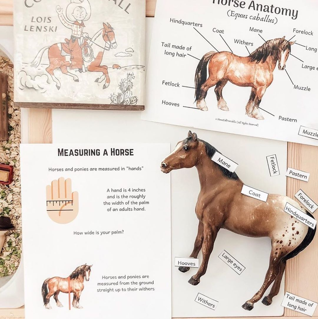 Horse Anotomy Labelling Home Learning Ideas Lesson Plans Unit Study Animal Education Homeschool Resources Printables Horses All About Horses Horse Mane [ 1084 x 1080 Pixel ]