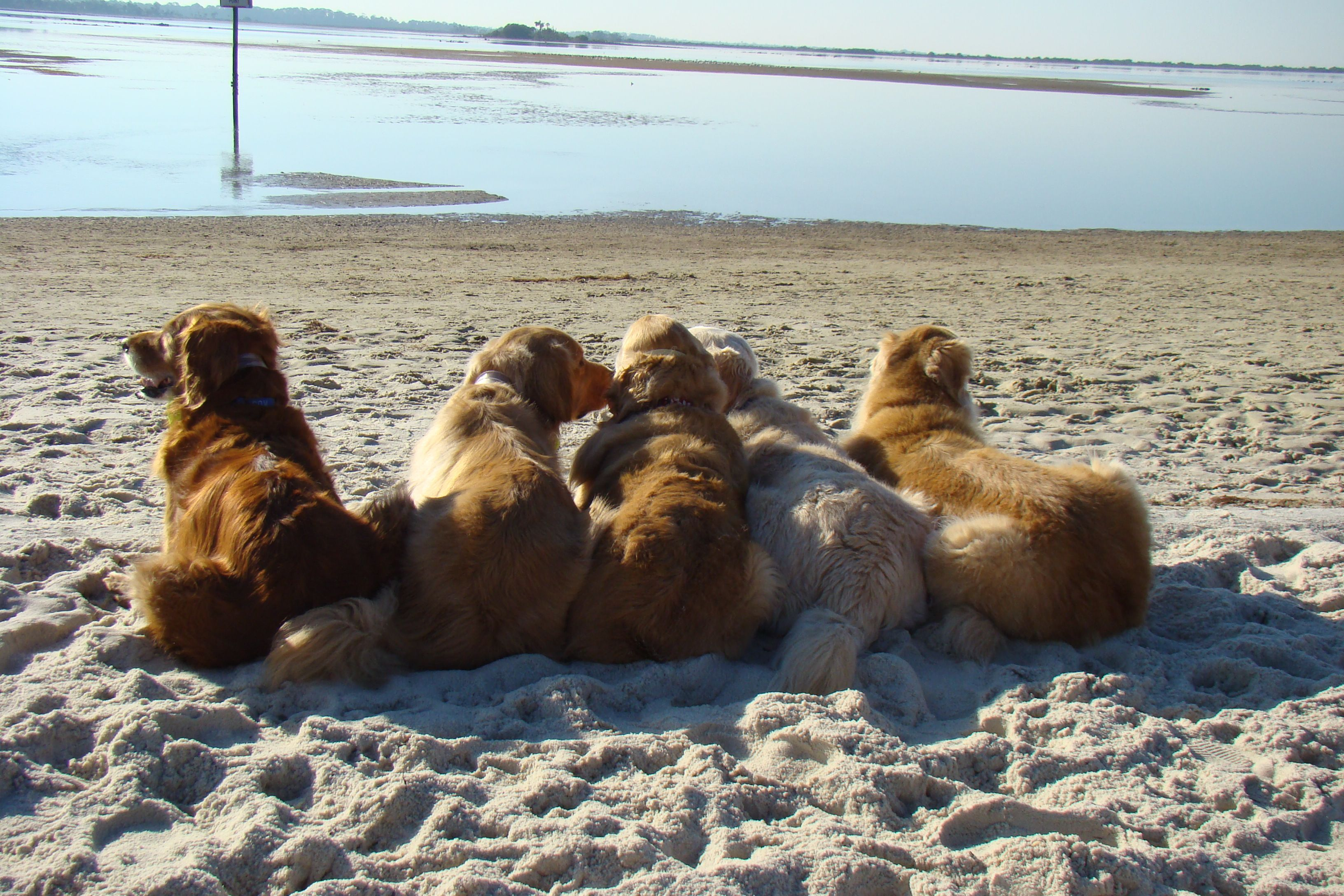 Last Time All 5 Beach Bums Will Be Together For Awhile Rusty
