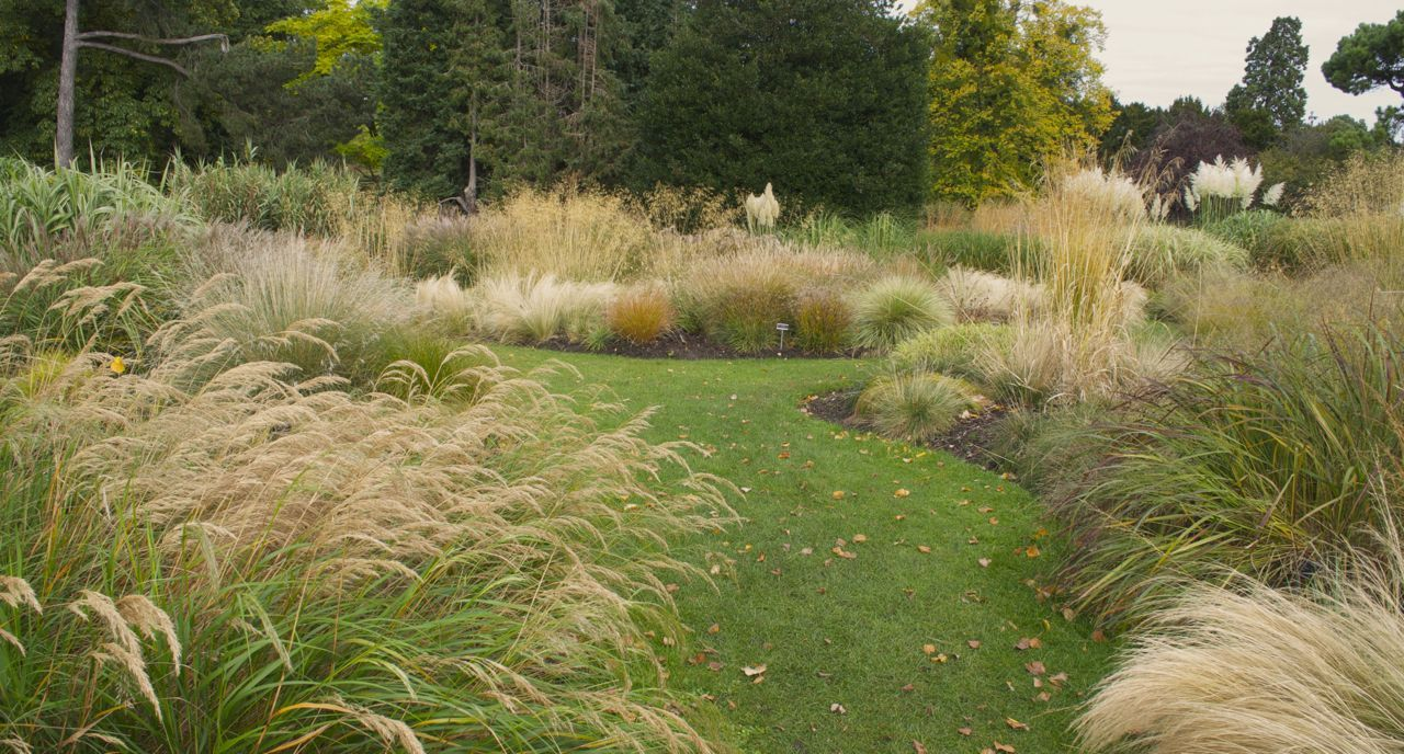 Love This Meandering Garden Of Grasses. Could We Do To The Left Side Of Our  Yard Running Along Fence And Up Around Cherry Tree Using To Hide Unit/etc?