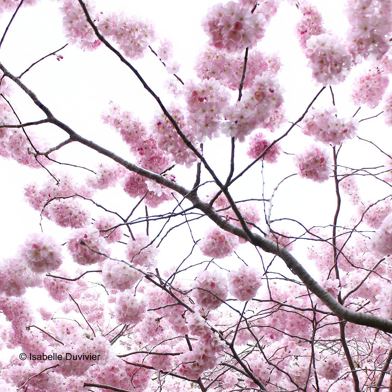 #spring #flower #blossom
