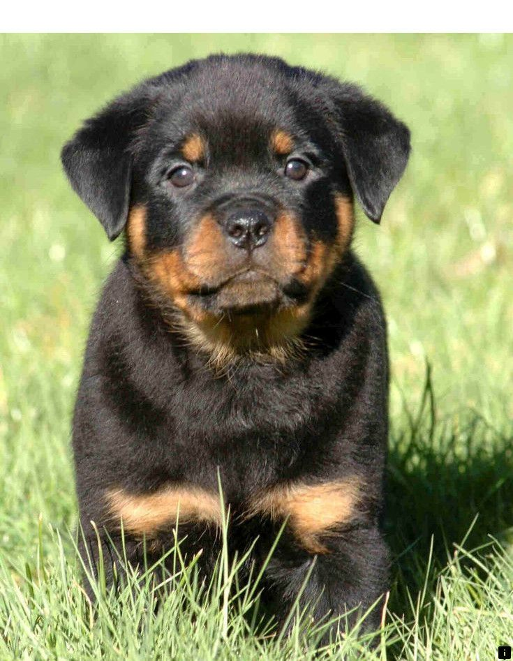 Learn About Puppys Simply Click Here For More The Web Presence
