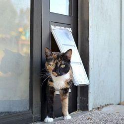 Cat Door For Sliding Glass Doors Cat Flap For Patio Doors Pet Doors Cat Door Cat Door Sliding Glass Door