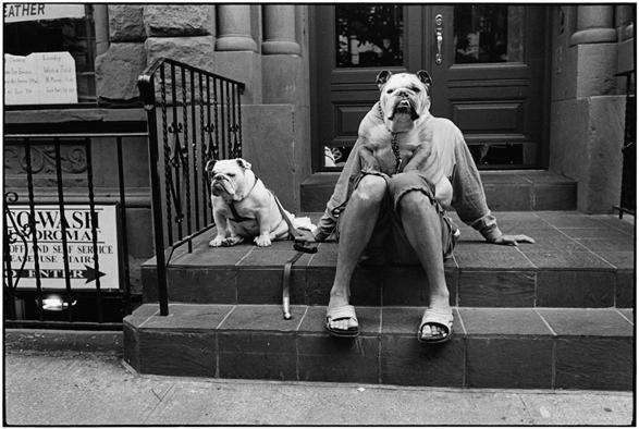 Elliott Erwitt  Scatti dal libro «Son of a Bitch», pubblicato nel 1974  Una raccolta di immagini di cani ripresi in pose o situazioni buffe  © Elliott Erwitt/Contrasto