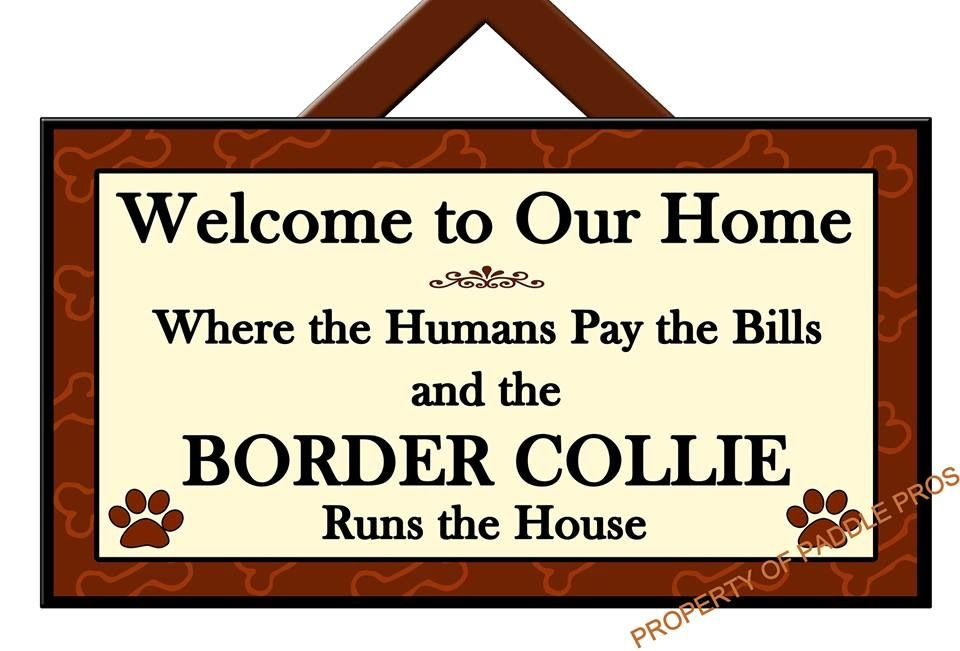 Yep our house run by two border collies