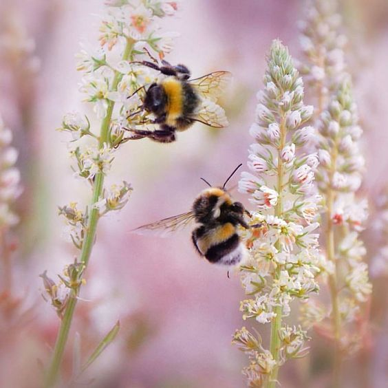 Pin By Bee On My Humble Abode: Pin By Randolph Johnson On Bees