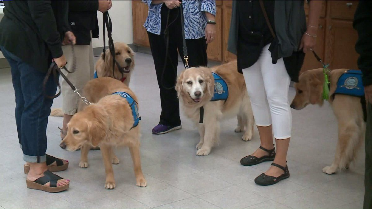 Comfortdogs Leave Illinois Bound For Texas Dogs Service Dogs