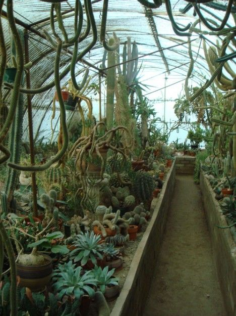 Cacti Greenhouse OMG! MY DREAM