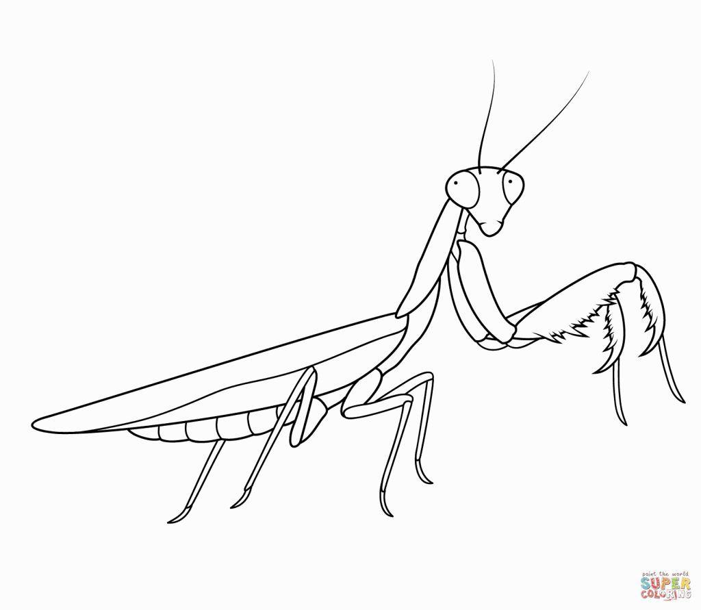 Praying Mantis Coloring Page Desenhos Ilustração E Tatuagem