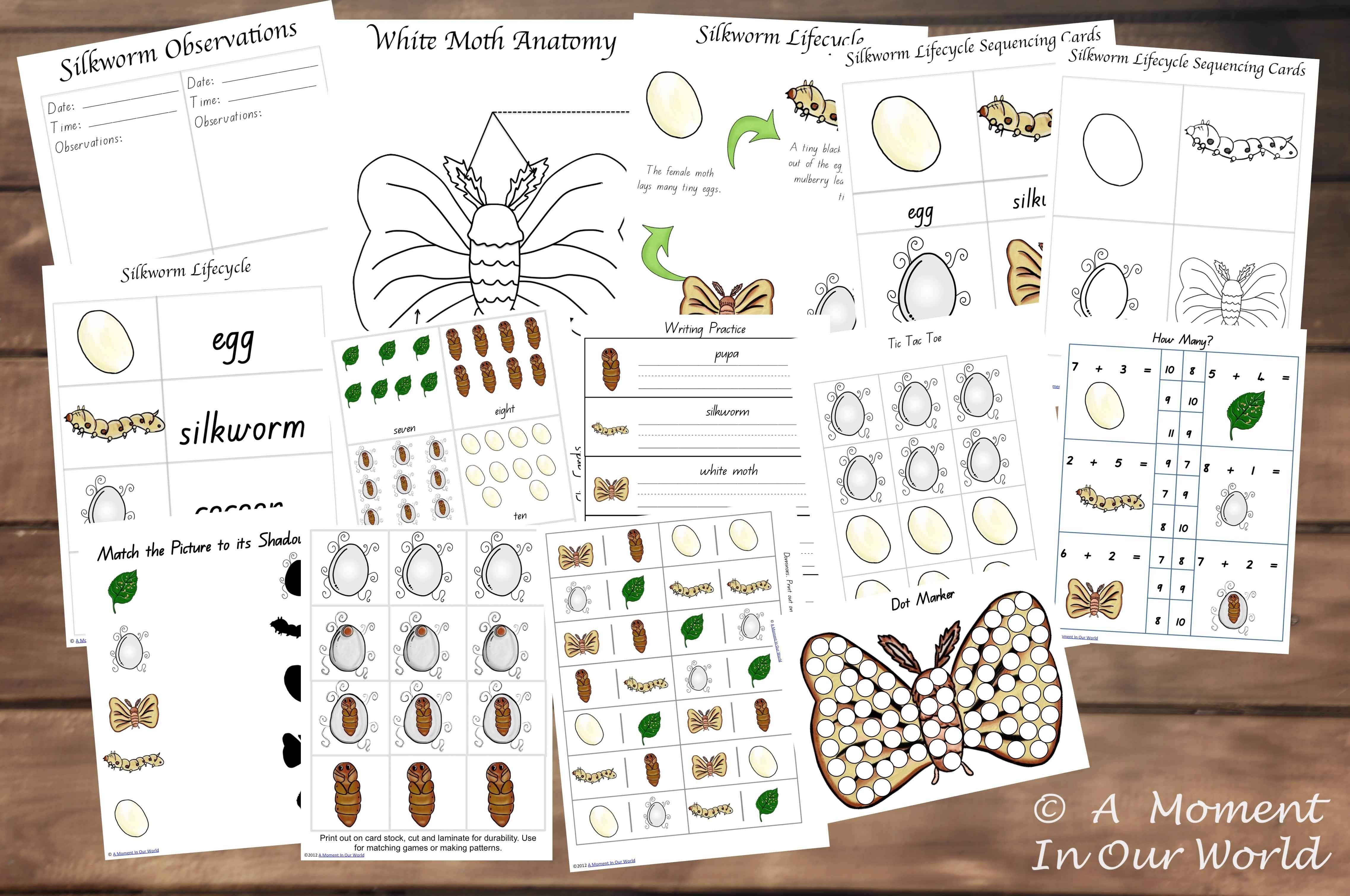 worksheet Silkworm Life Cycle Worksheet tot to prep pack silkworms pack