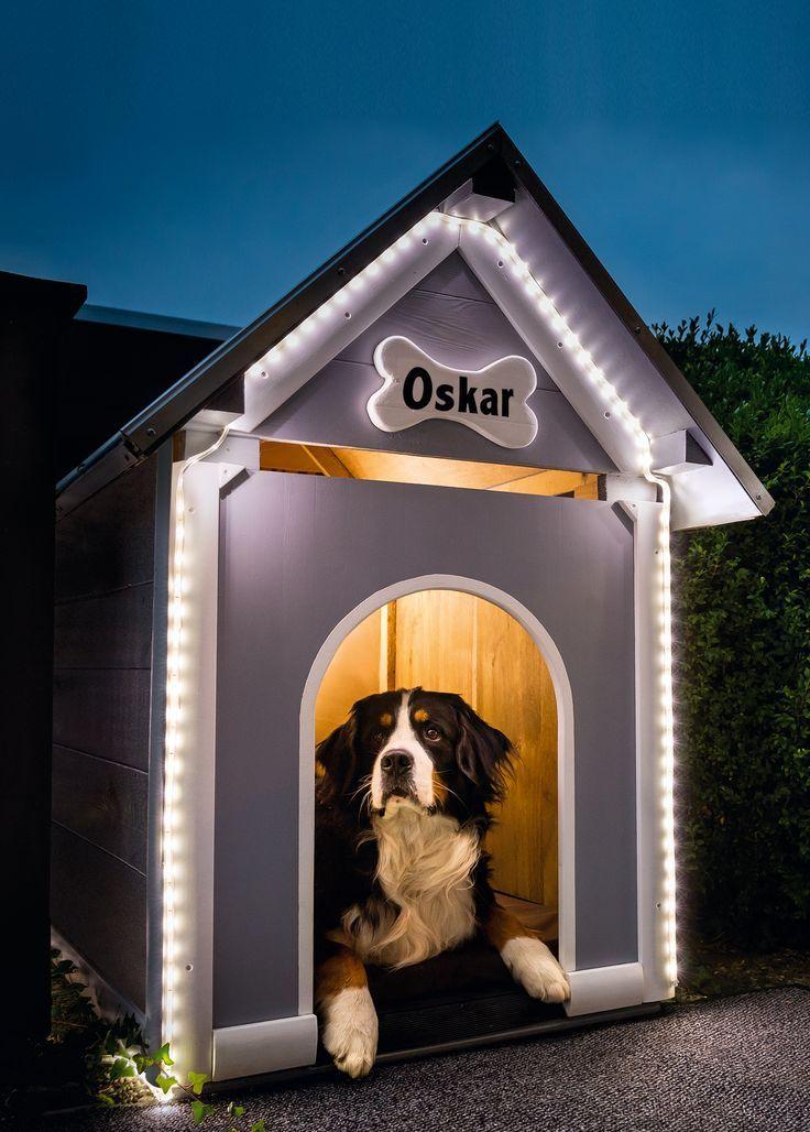 Hunde Sachen Kaufen : pin auf hund dog ~ Watch28wear.com Haus und Dekorationen