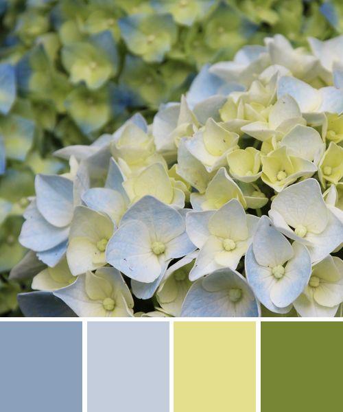 Farbinspirationen: Hortensie In Blau Und Grün