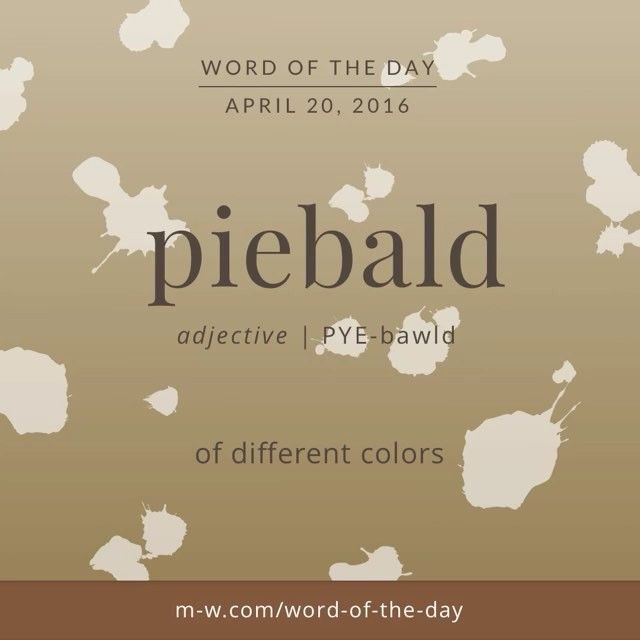 The #WordOfTheDay is piebald.
