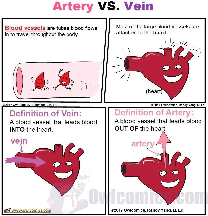 Artery Vs Vein By Owlcomics Making Science Reading Painless A