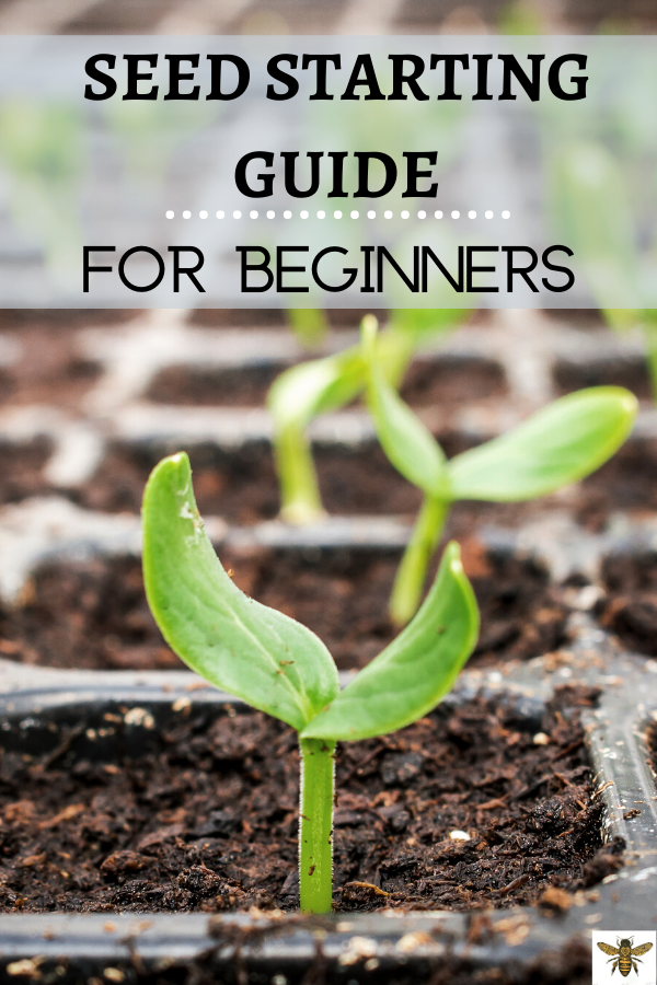 How to Start Seeds Indoors for Beginners is part of Planting calendar, Garden plants vegetable, Garden care, Plants, Vegetable garden planning, Planting vegetables - Save time and money by learning  Seed Starting Guide for Beginners ! You'll be more sustainable as you grow plants from seeds indoors!