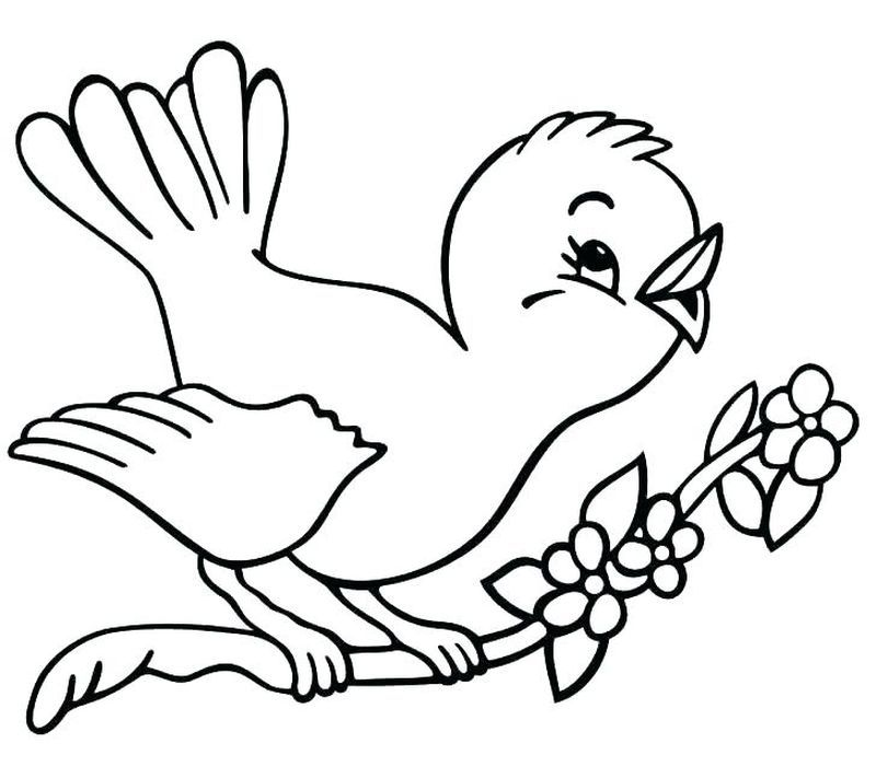 24+ Bird coloring pages printable ideas