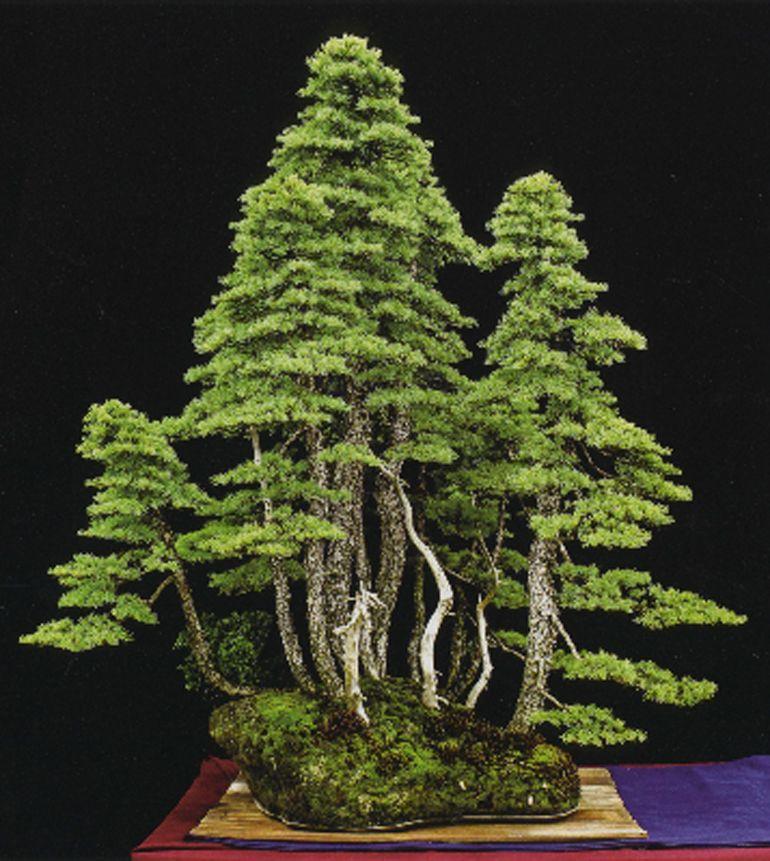 North American Bonsai Excellence The 5th U S National Bonsai Exhibition Album Is Here Bonsai Bark Flowering Bonsai Tree Bonsai Forest Bonsai Tree