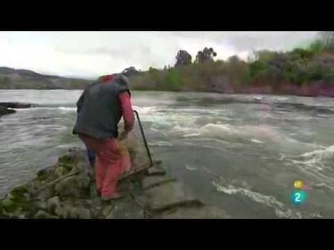 pescando lamprea - Buscar con Google