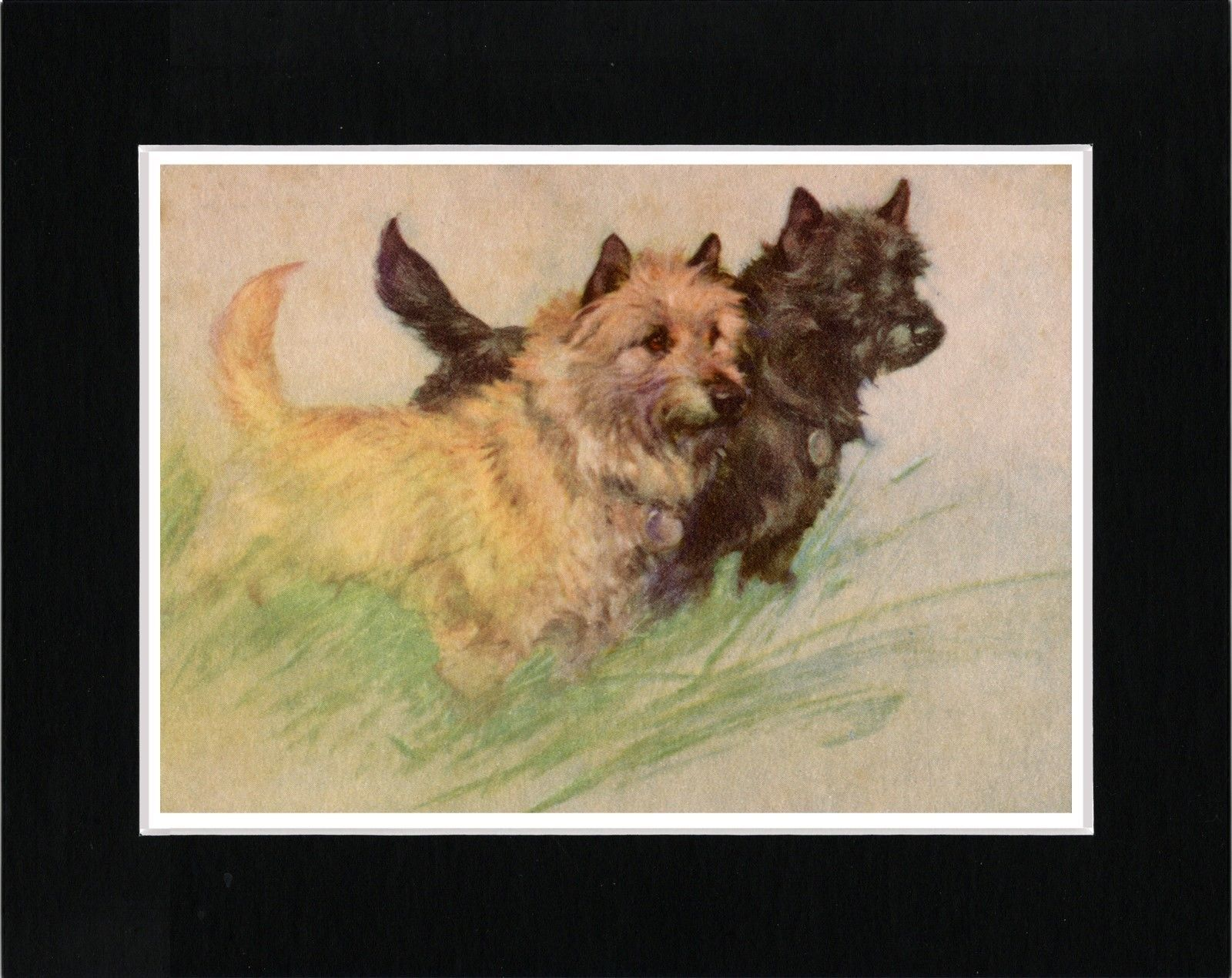 Cairn Terrier Dogs Lovely Vintage Style Dog Art Print Matted Ready To Frame Ebay Dog Print Art Dog Art Cairn Terrier